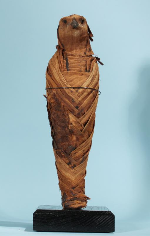Egyptian Falcon Mummy